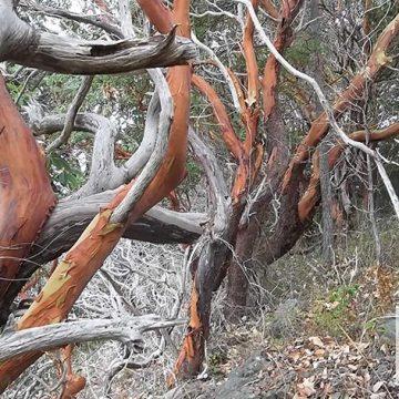 Knarly Trees Growing on Orcas Island