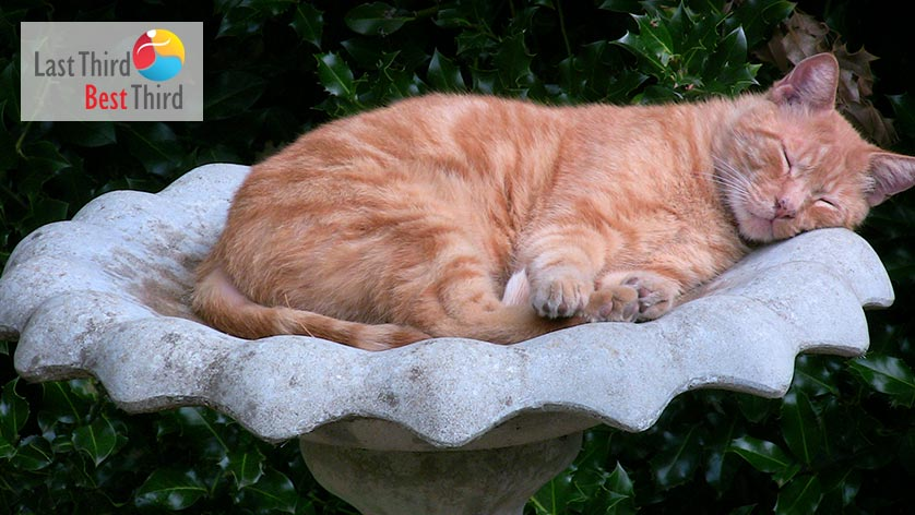 Orange-colored tabby cat Sleeping-In-the-Birdbath