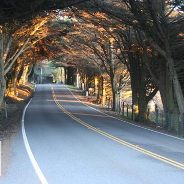 Small 2-lane road gently curves to the right under a canopy of trees from left and right arching over the road and meeting each other in the middle above