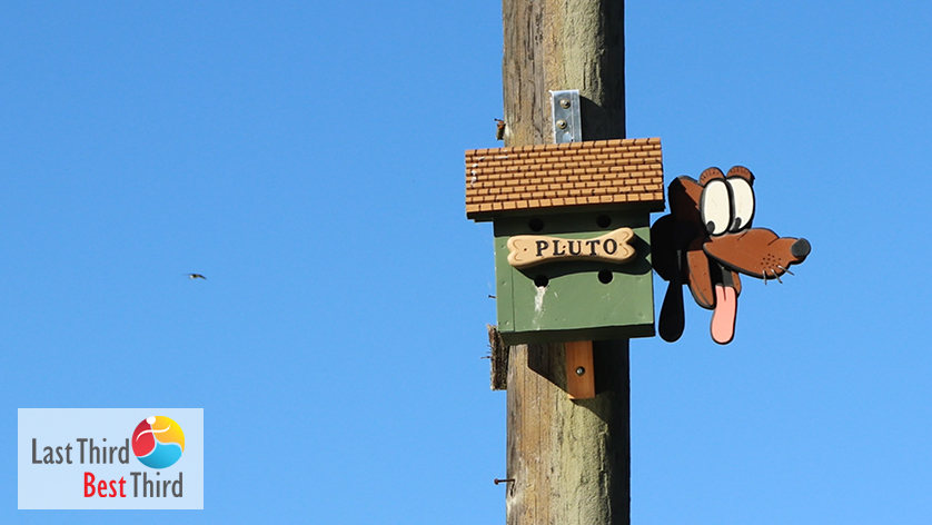 Pluto Birdhouse in Ridgefield WA, deep blue sky in the background