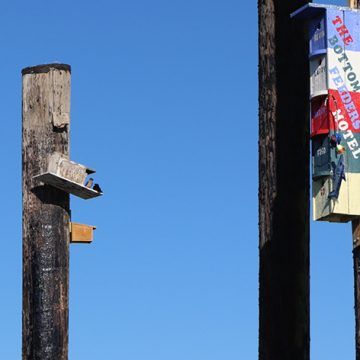 Birds perch on birdhouses build on poles in the Lake River, Ridgefield Washington. Beautiful deep blue sky background.