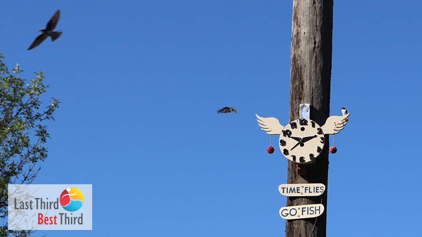 "Birdhouse depicting a clock with wings and 2 signs that say, ""Time Flies,"" and ""Go Fish."" Birds flying in the background, with a beautiful blue sky."