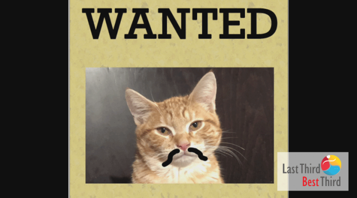 """ChaCha the Cat calico cat with sharpie mustache in a """"Wanted"""" poster"""