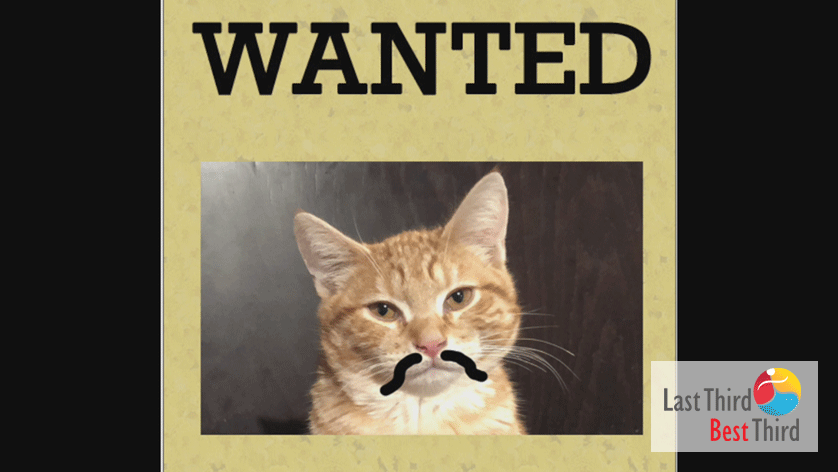 "ChaCha the Cat calico cat with sharpie mustache in a ""Wanted"" poster"