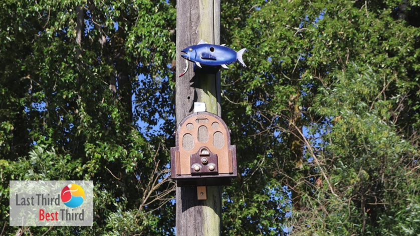 Birdhouses-of-Ridgefield-WA-Fish-and-Jukebox